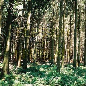 Bild für 'A Splendor In The Grass'