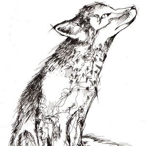Image for 'Tinush'