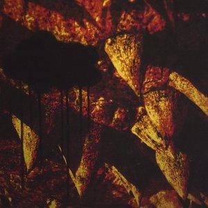 Image for 'Awake Ancient'