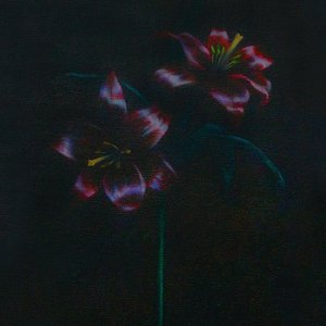 Image for 'Black Lillies'