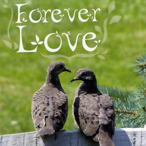 Image for 'Forever Love'