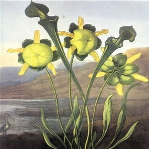 Bild für 'English Commonflowers'