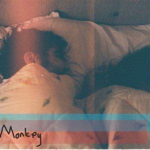 Immagine per 'Adult Monkey'
