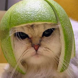 Bild för 'Cat Miaowing'