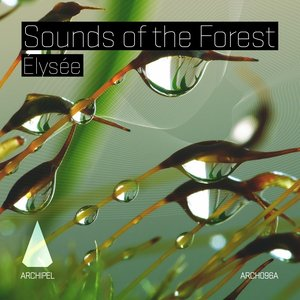 Image for 'Sounds of the Forest'