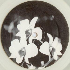 Image for 'Phalaenopsis'