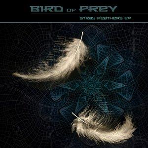 Imagem de 'Stray Feathers'