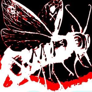 Image for 'Nosmaus'