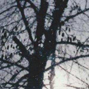 Image for 'Margin'