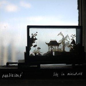 Image for 'Windowbox'