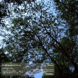 Immagine per 'Long Wandering'
