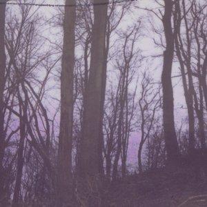Image for 'Deforestation'