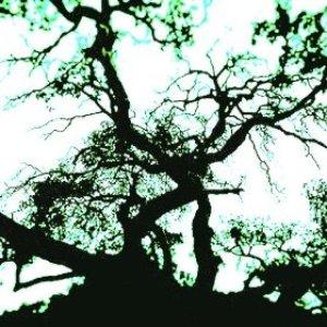 Image for 'Beautiful Melancholy'
