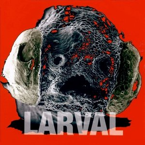 Image for 'Larval'