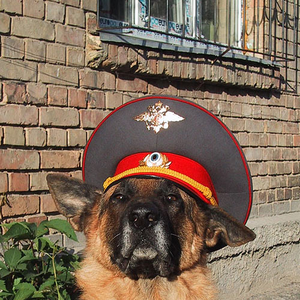 Партизаны в Ставропольском крае РФ пытались подорвать райотдел полиции - Цензор.НЕТ 1236