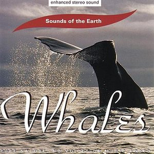 Image for 'Whales'