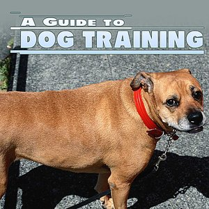 Image for 'Guide To Dog Training'