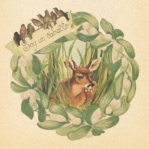 Image pour 'Robin'