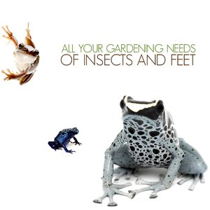 Image for 'of insects and feet'