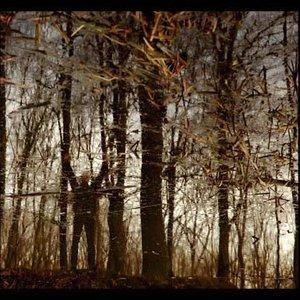Image for 'Im Bannwald'