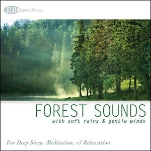 Image for 'Forest Sounds with Soft Rains & Gentle Winds: Nature Sounds for Deep Sleep, Meditation & Relaxation'