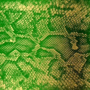 Imagem de 'Money Green Viper'
