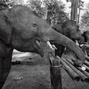 Image for 'Thai Elephant Orchestra'