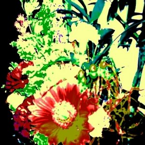 Image pour 'Orange Flowers'