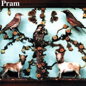 Imagem de 'Museum Of Imaginary Animals'