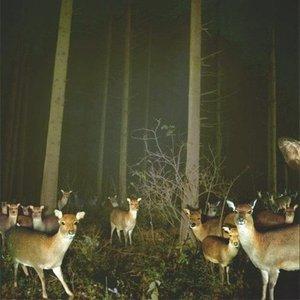 Image for 'Light Fields - Single'