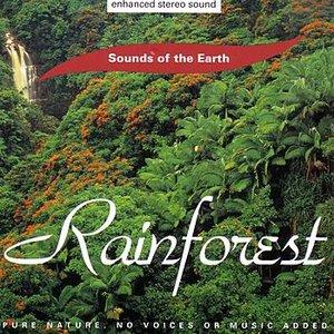 Image for 'Rainforest'