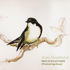 Image for 'Pied Flycatcher (Ficedula hypoleuca)'