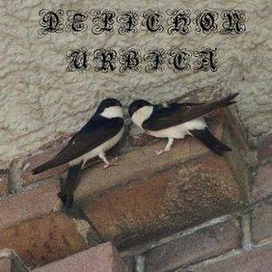 Immagine per 'Delichon Urbica'