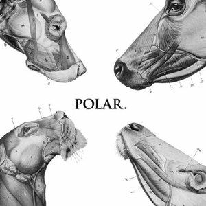 Imagem de 'This Polar Noise'