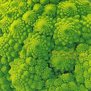 Image pour 'fractal'