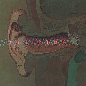 Image for 'Auricle'