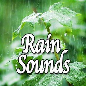 Image for 'Rain Sounds (Nature Sounds)'