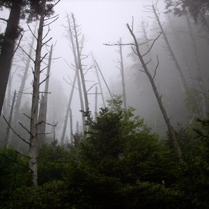 Image for 'ghost forest'