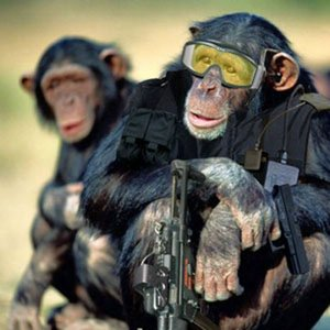 Image for 'Monkey Swat'