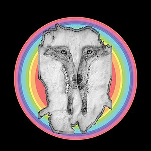 Image for 'Rainbow Wolves'
