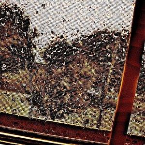 Image for 'Träume von Regen'