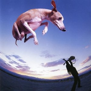 Image for 'Flying Dog'