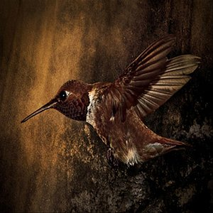 Image pour 'Keep Humming Bird'