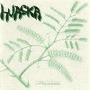 Imagem de 'Mimosa Hostilis'