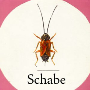 Image for 'Schabe'