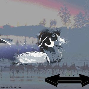 Image for 'Sing, Silverduck, Sing'