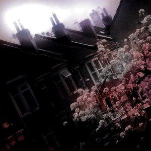 Bild für 'Lonelight'