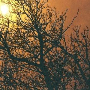 Imagem de 'Overgrown'