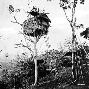 Image for 'A Tree House'