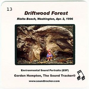 Image for 'Driftwood Forest (Rialto Beach, Washington, April 2, 1996)'